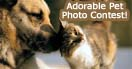 Pet Photo Contest for a Chance to Win a Smoky Mountain Vacation Getaway